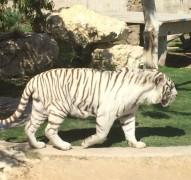 Sortie zoo Al Ain CE1 (31)