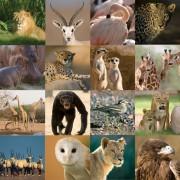 Visuel Al-Ain-Zoo