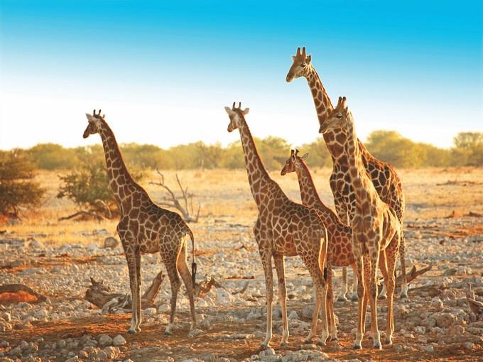 Visuel Namibie